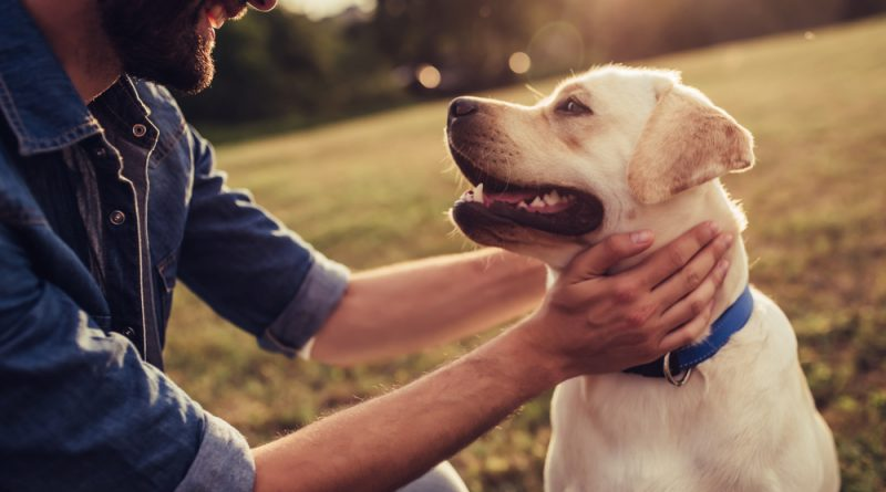 Know the Pet Laws to be a Good Pet Owner
